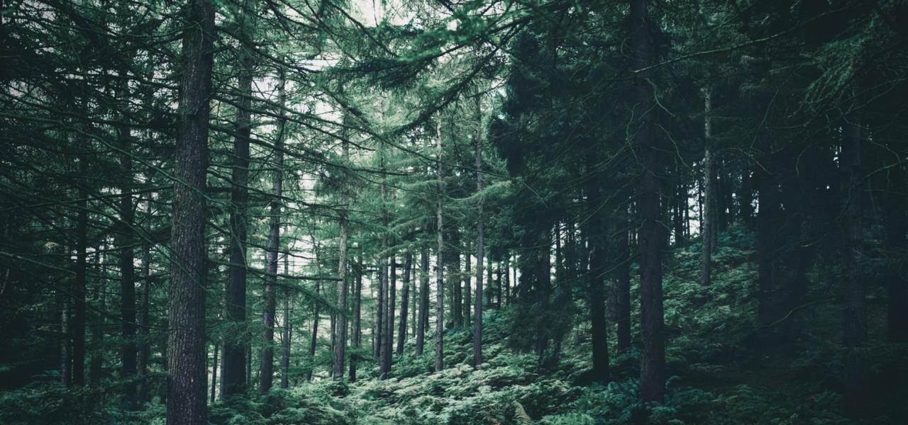 Derprosa™ focuses on sustainability